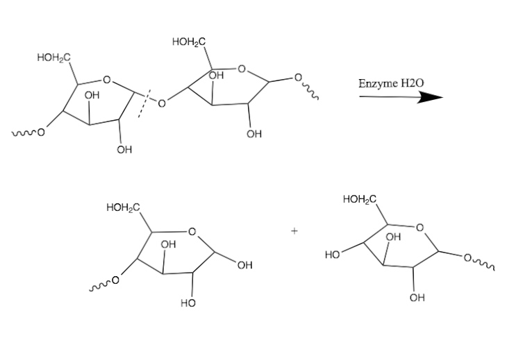 hydrolysis of starch by hcl Moved permanently the document has moved here.