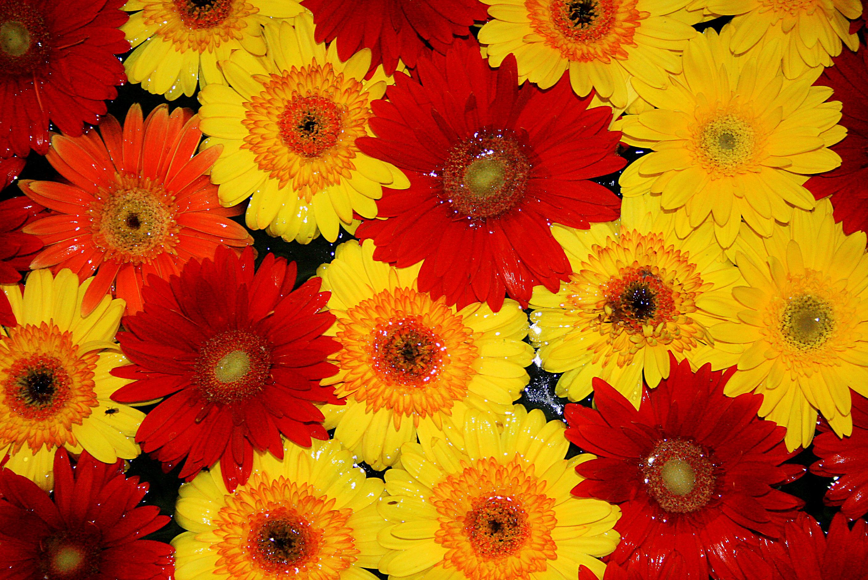Resultado de imagen para flores de colores
