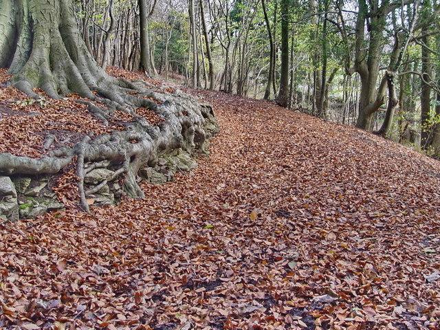 Footpath in Arnside Knott Woods - geograph.org.uk - 1579259