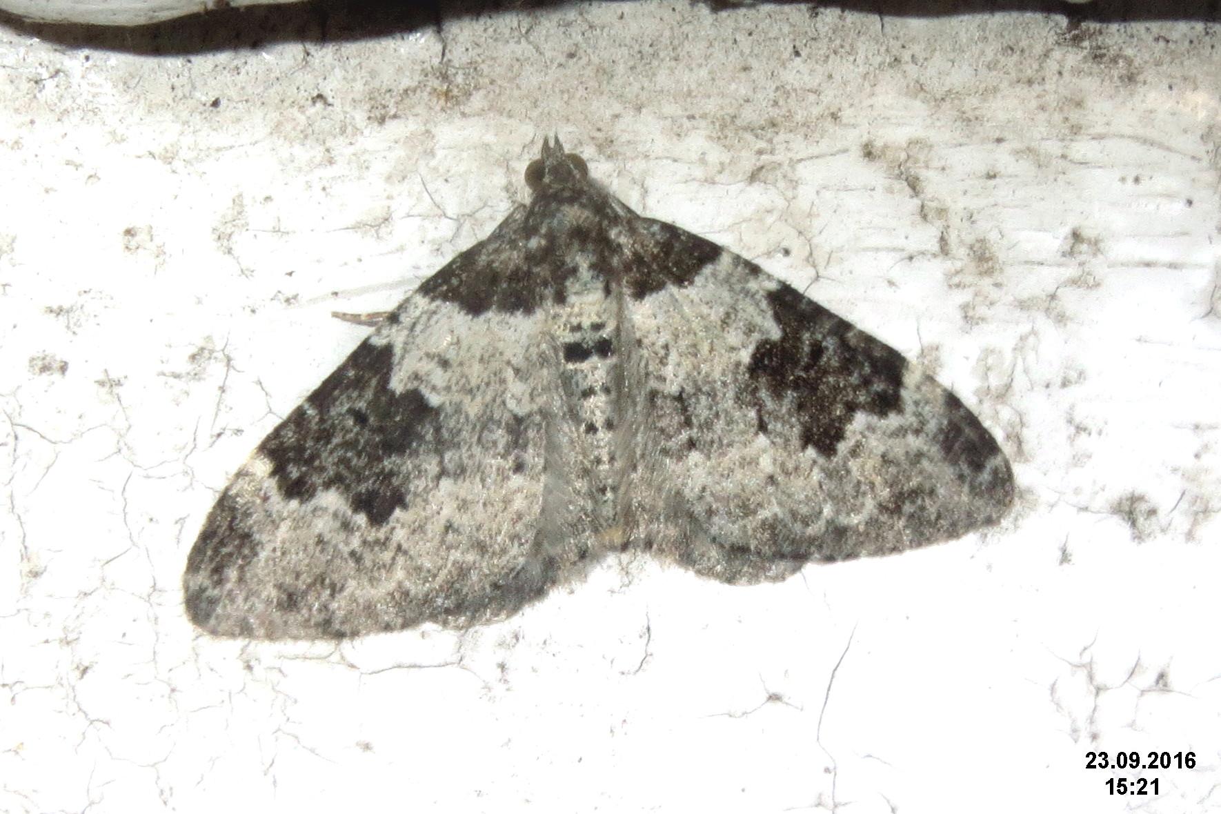 File:Garden carpet (Tesco) (32861241081).jpg