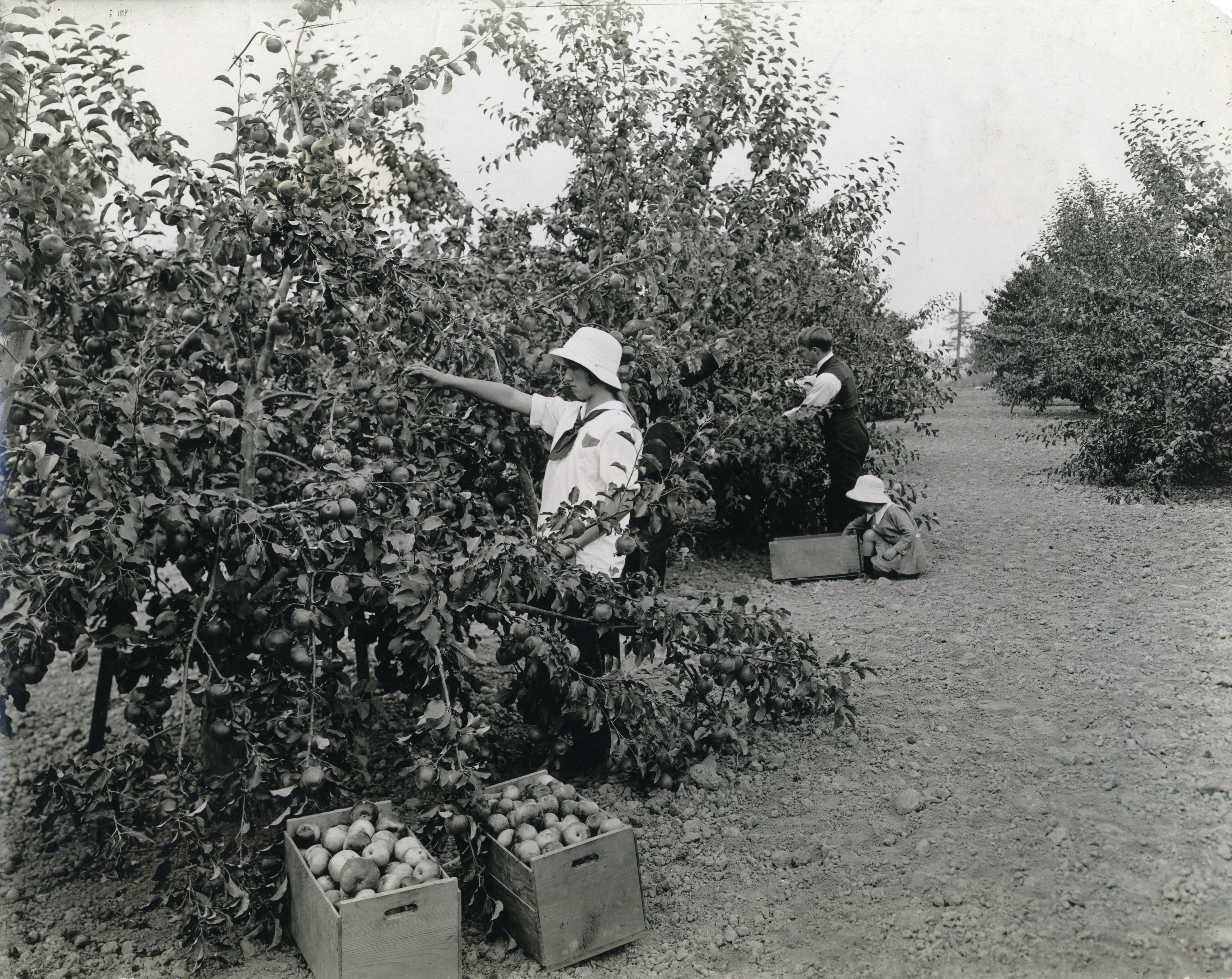 otis orchards black dating site Full real estate market analytics for otis orchards & east farms  across all racial groups: white, black,  otis orchards school 22000 e wellesley ave otis.