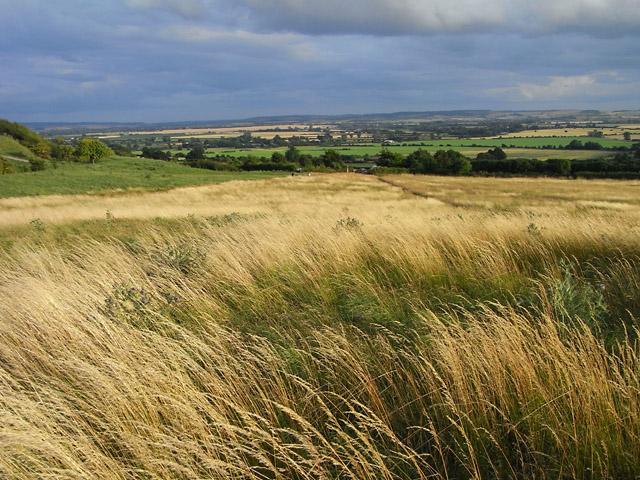 Grassland, Wittenham Clumps - geograph.org.uk - 1566180