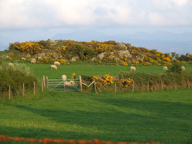 Grazing land near to Newborough Forest - geograph.org.uk - 169651