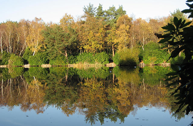 Hammond's Pond, Lightwater Country Park - geograph.org.uk - 1492478