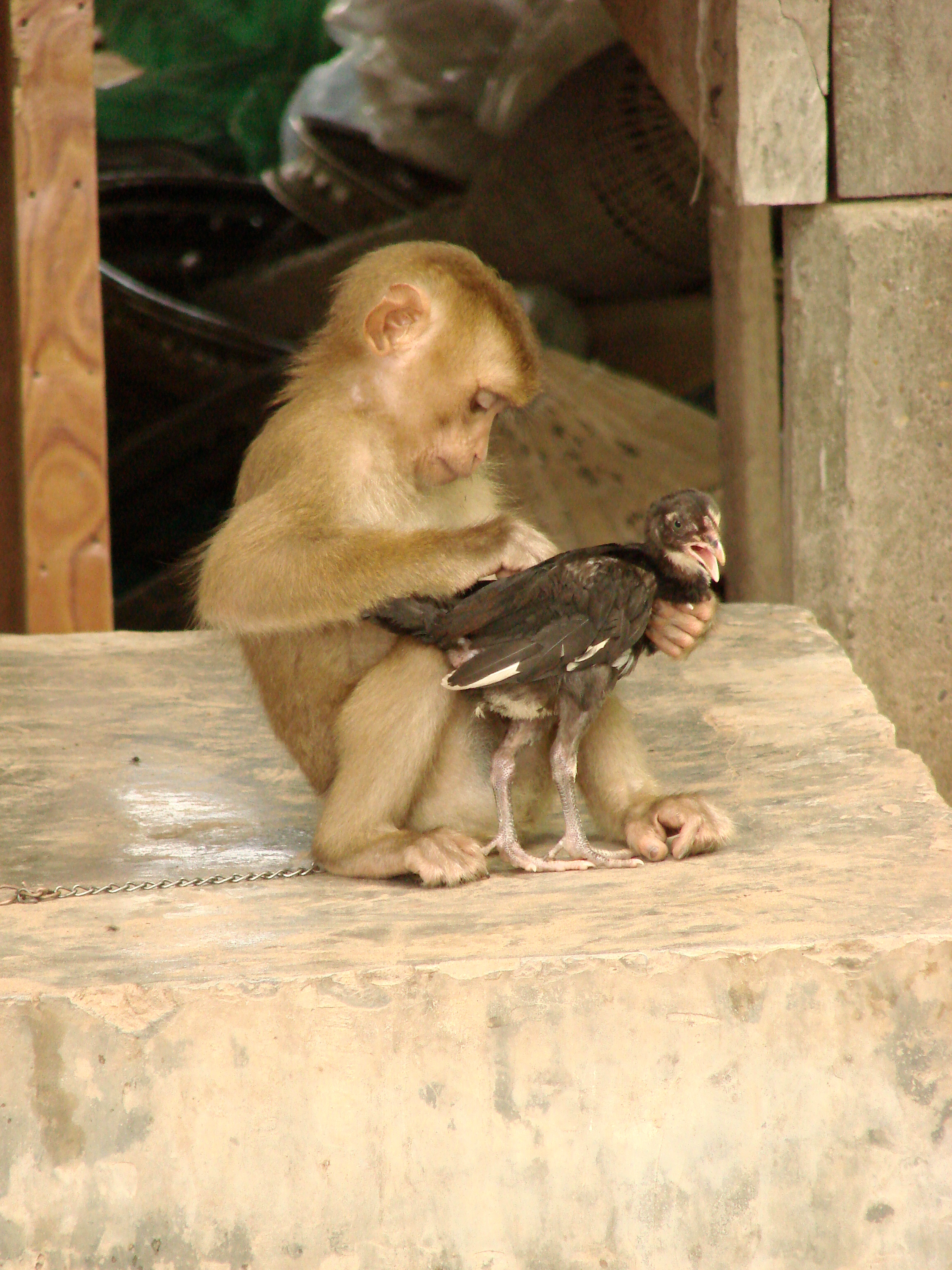 Monkey Island The Machine