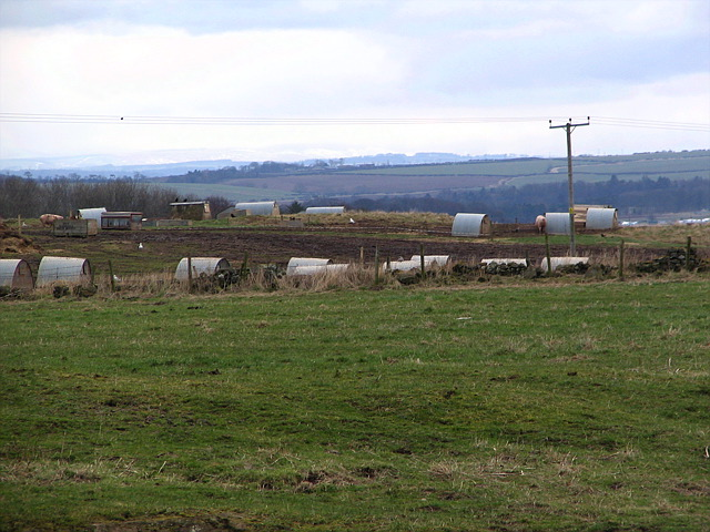 File:Pig farm - geograph.org.uk - 138541.jpg