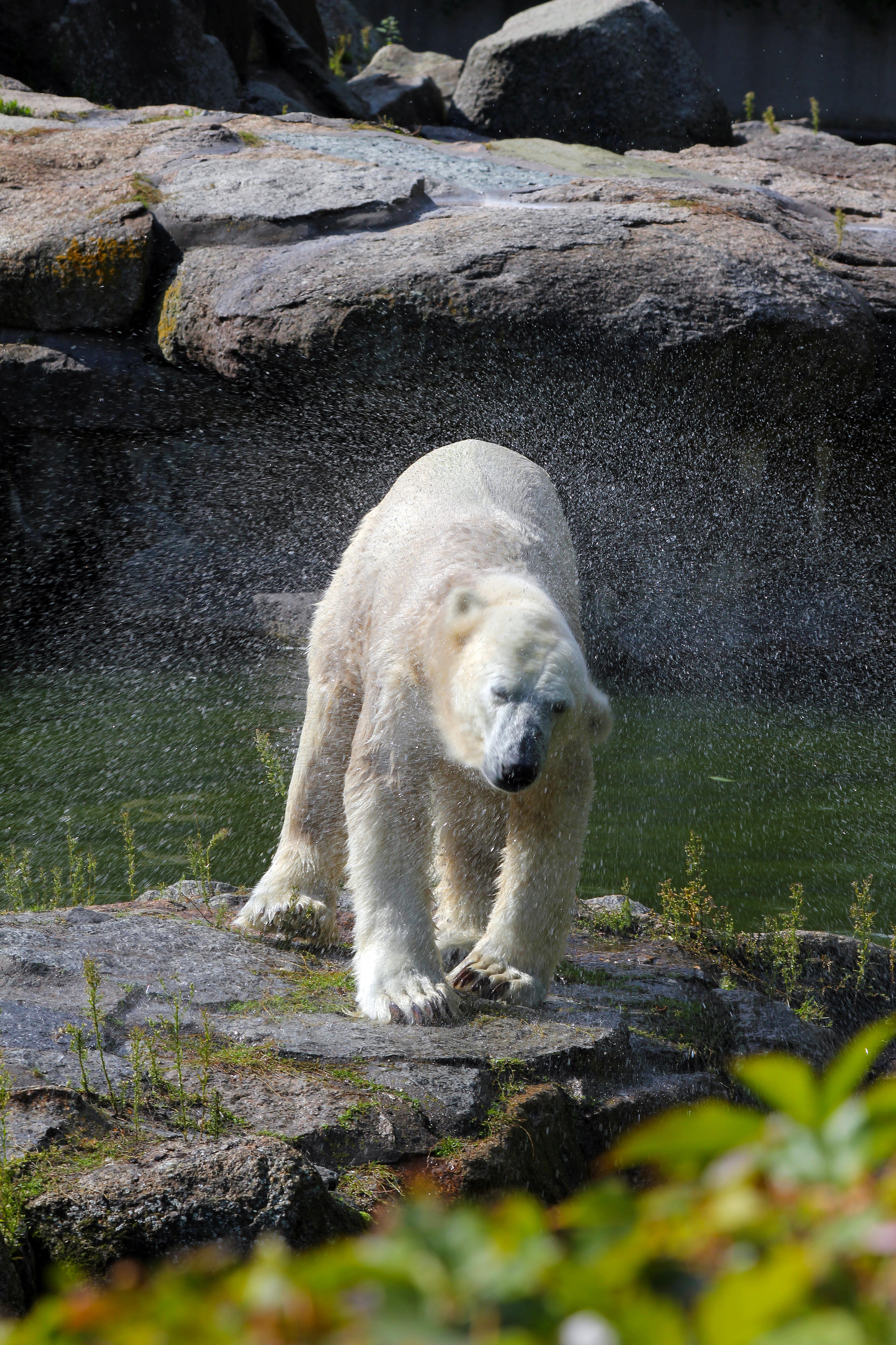 In Memory of Polar Bear Superstar Knut (30 Pic Tribute)