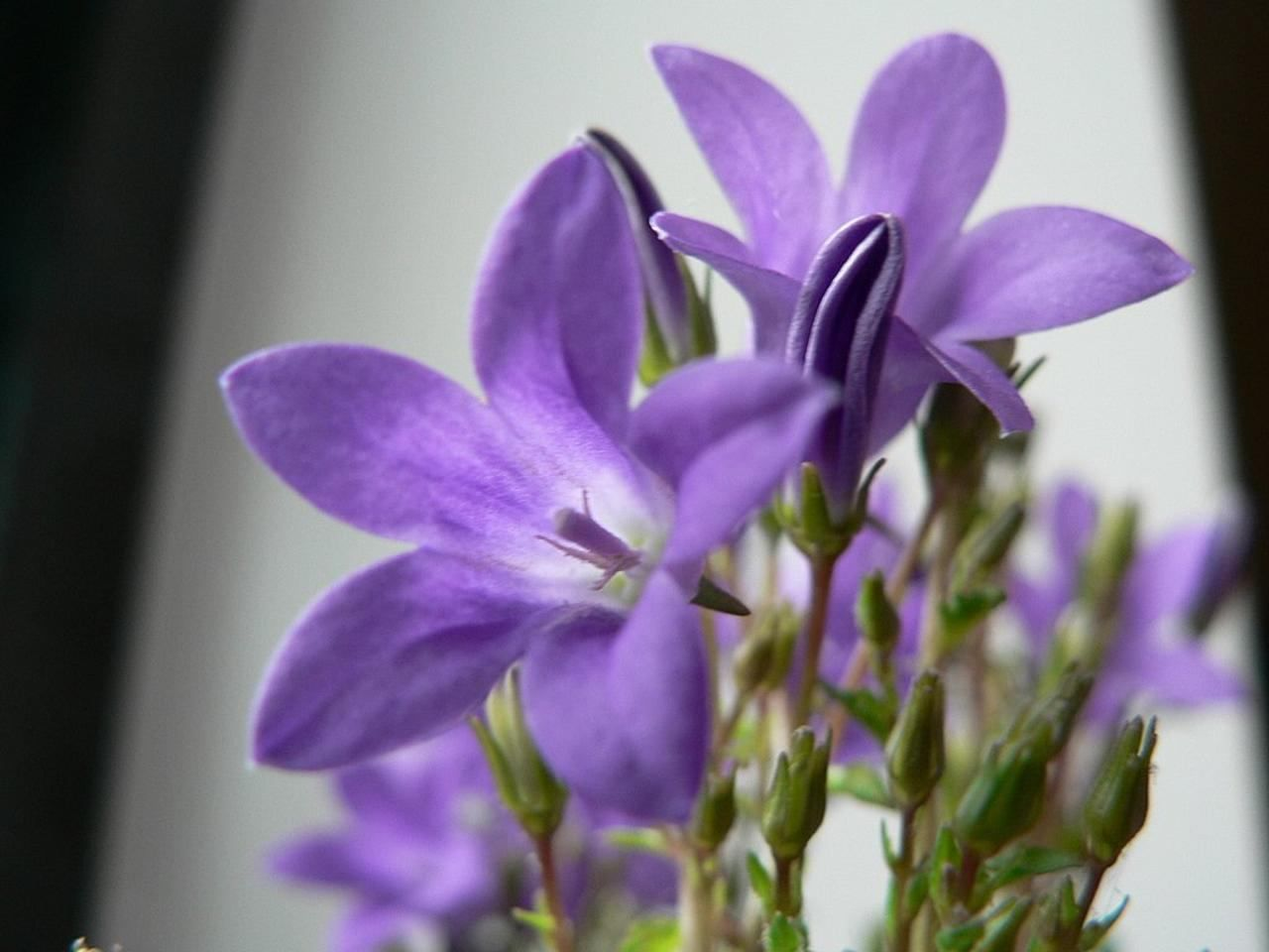 Purple Flower Names With Pictures New House Designs