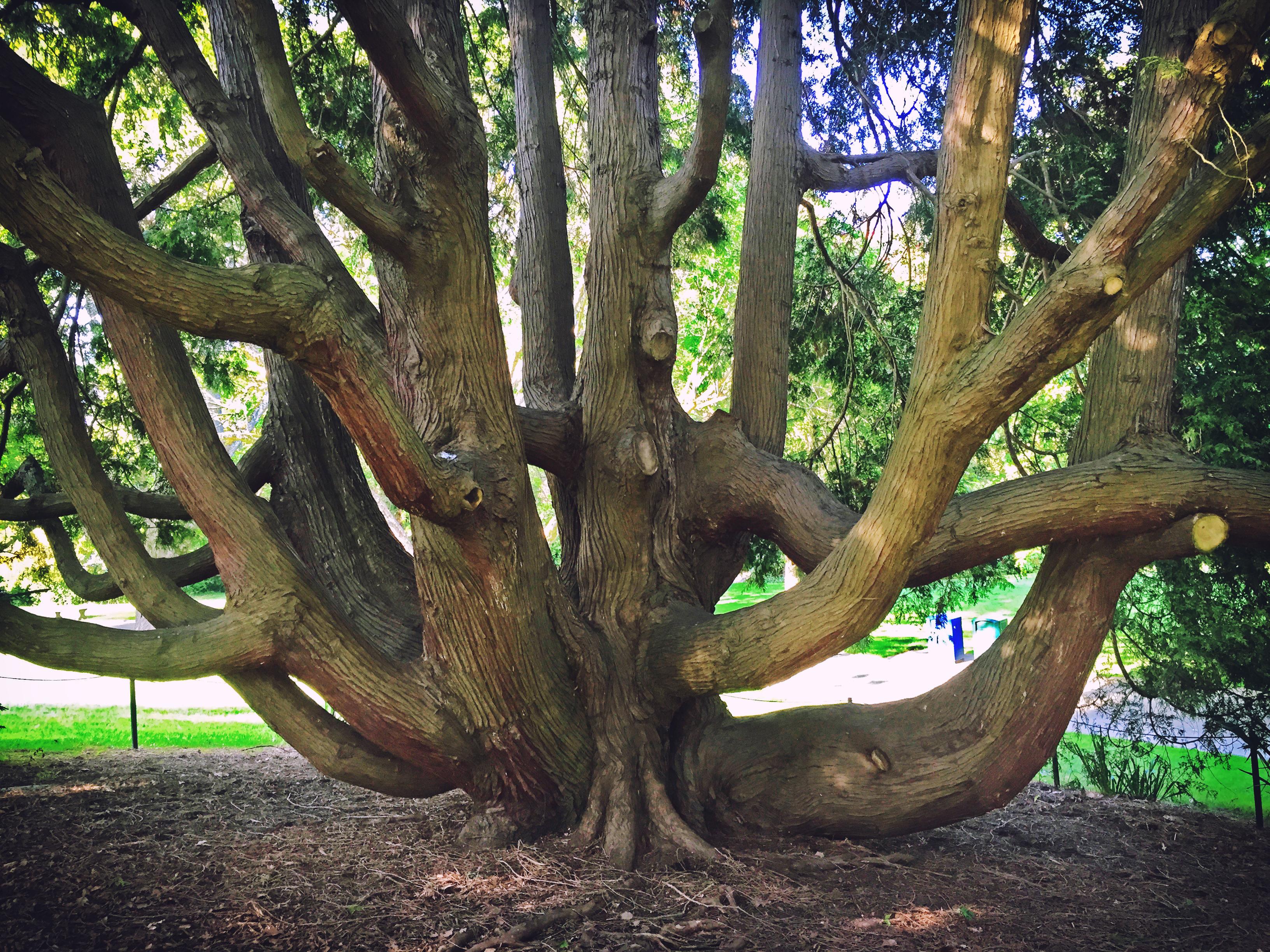 File:Seattle U2014 Carl S. English Jr. Botanical Gardens U2014 03