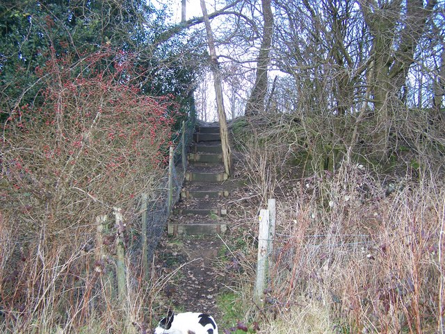 Steps on Greensand Way - geograph.org.uk - 1143926