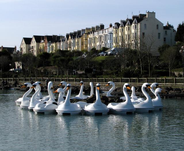 The Pickie swans, Bangor - geograph.org.uk - 1239436