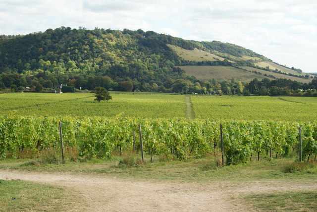 View Towards Box Hill, Surrey - geograph.org.uk - 1503555