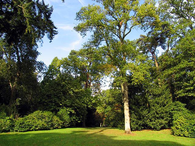 Westonbirt Arboretum - geograph.org.uk - 69570