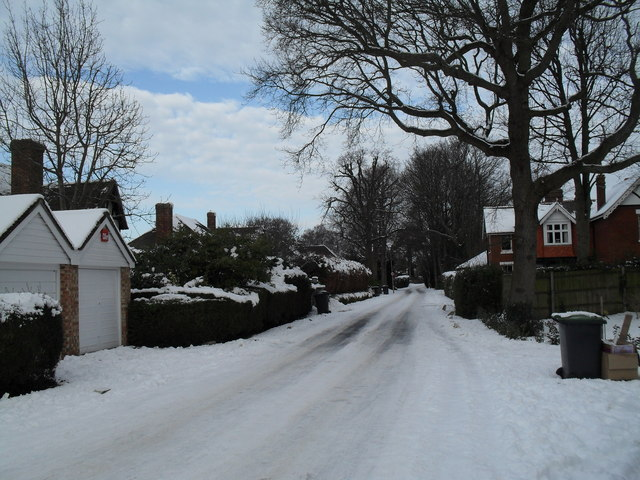 File:Winter trees in Wade Court Road - geograph.org.uk - 1672195.jpg