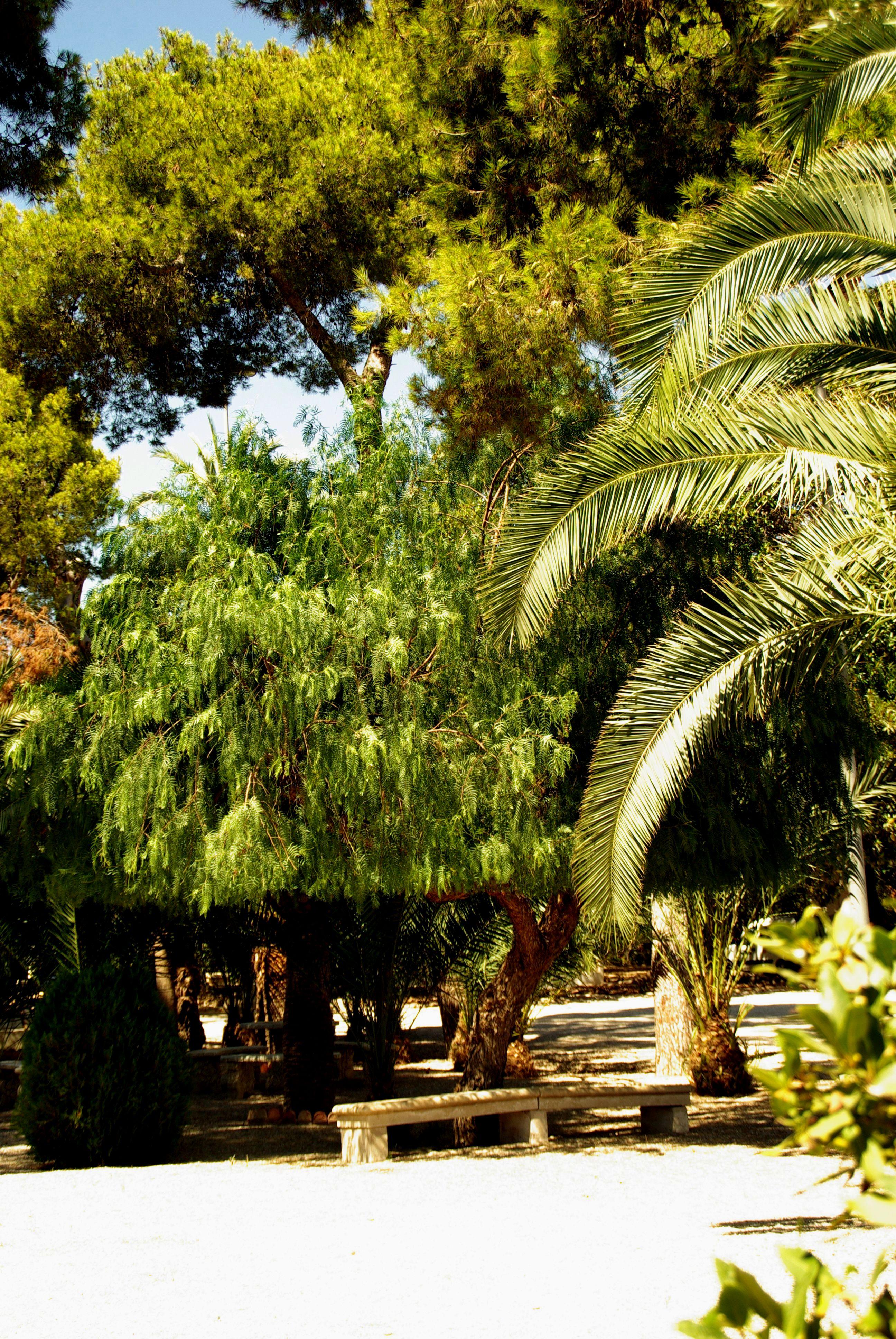 File:® ┼ M.D. EL CAMPELLO VILLA MARCO JARDÍN - panoramio (5).jpg ...
