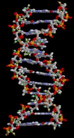 Doble hèlix d'ADN