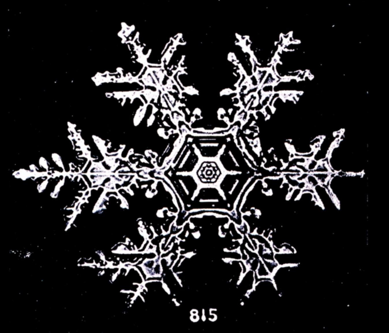 file bentley snowflake 815 jpg wikimedia commons