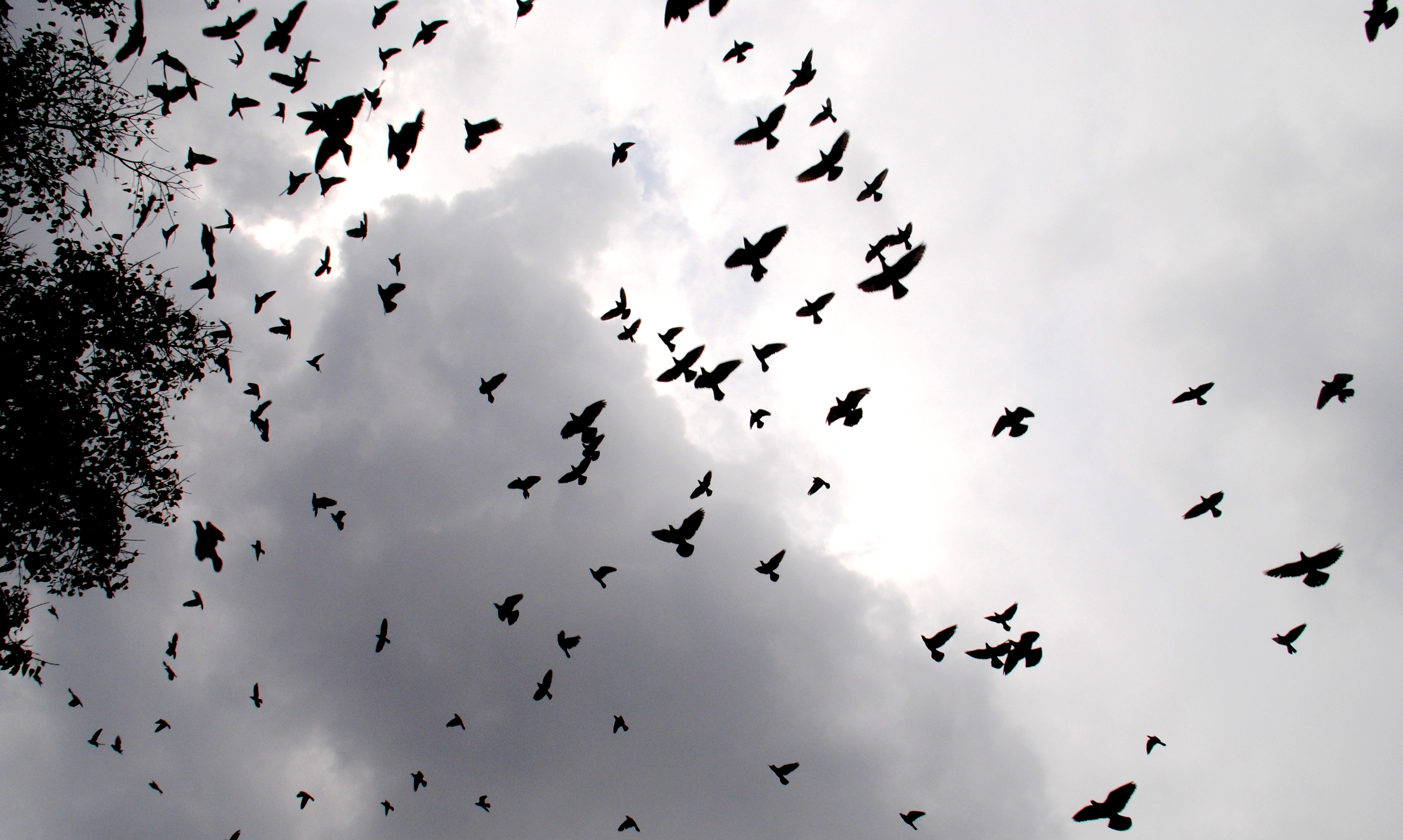 file birds flying at sky 2 jpg wikimedia commons