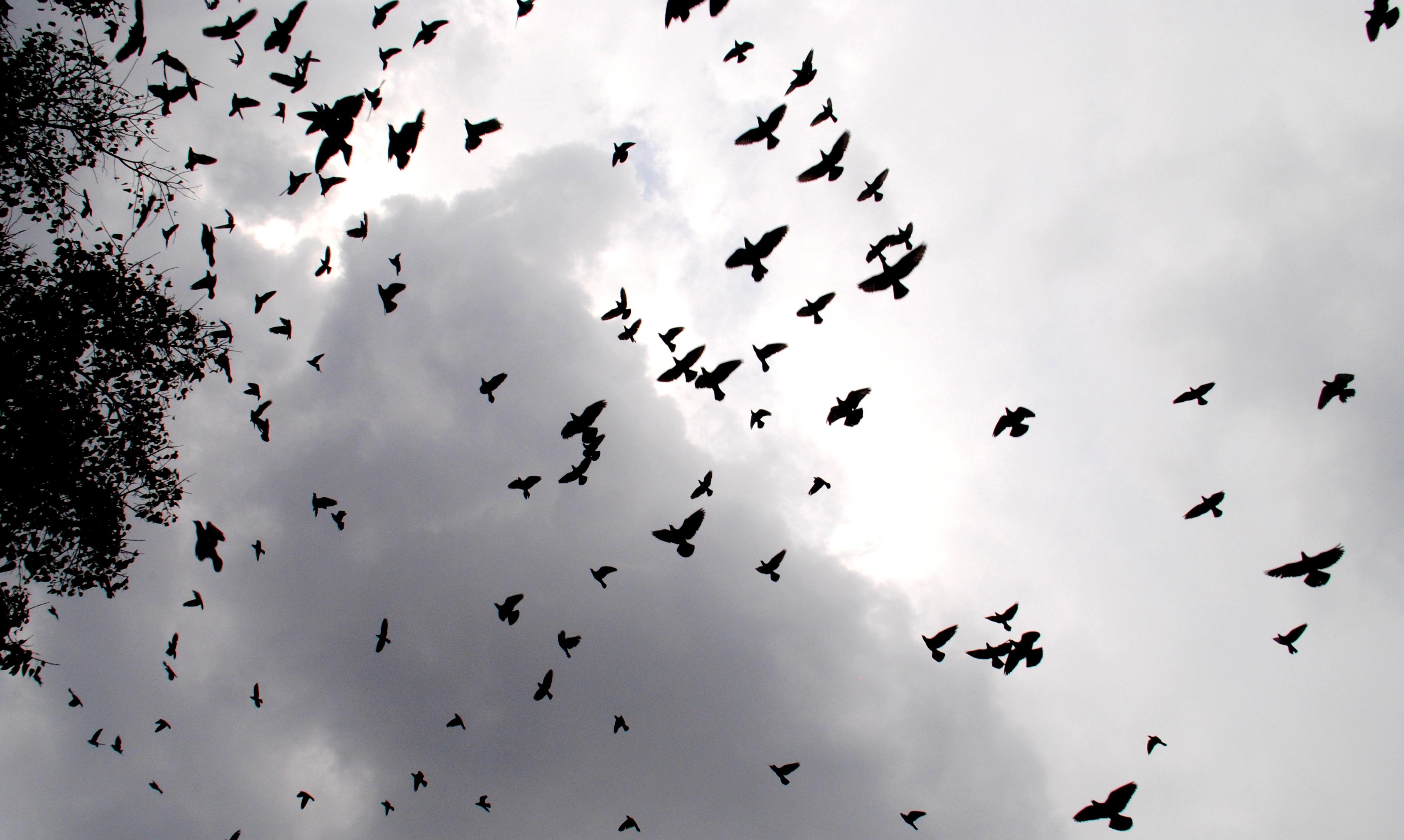 Birds flying in the sky - photo#28