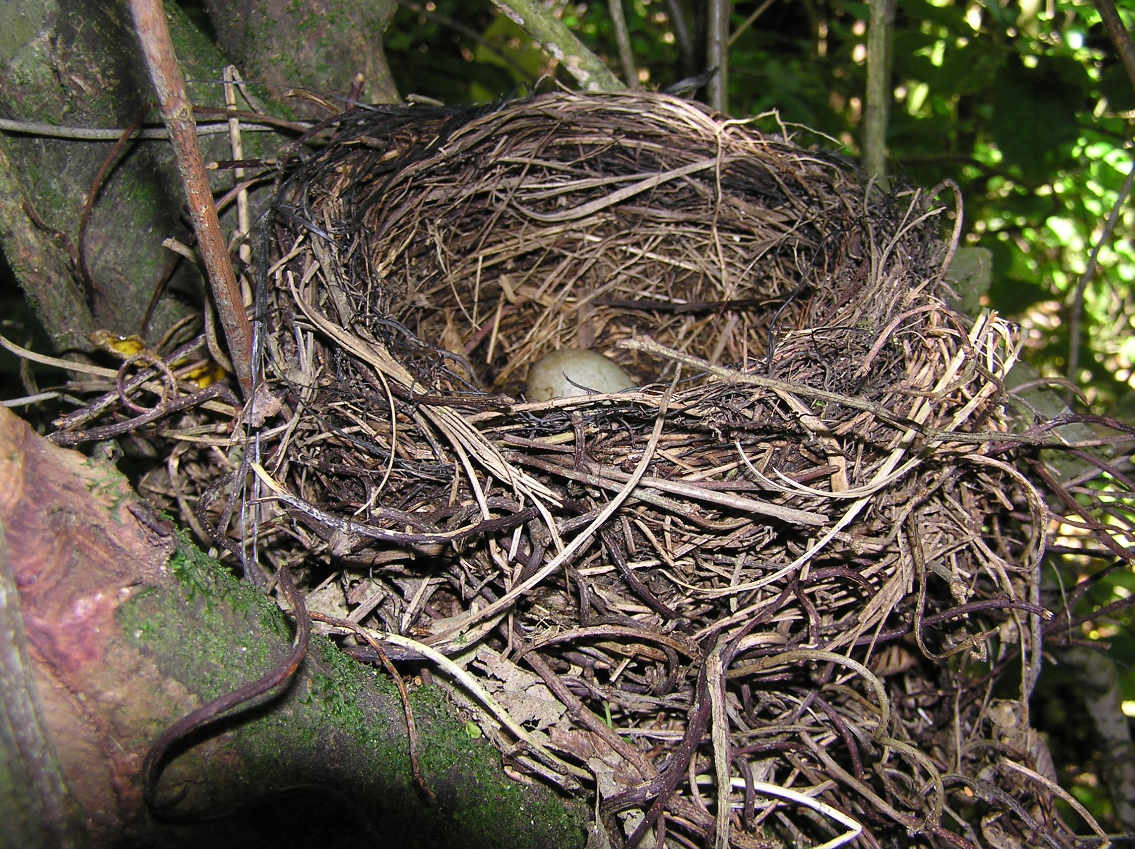 Nest Way To Treat Fleas On Cats