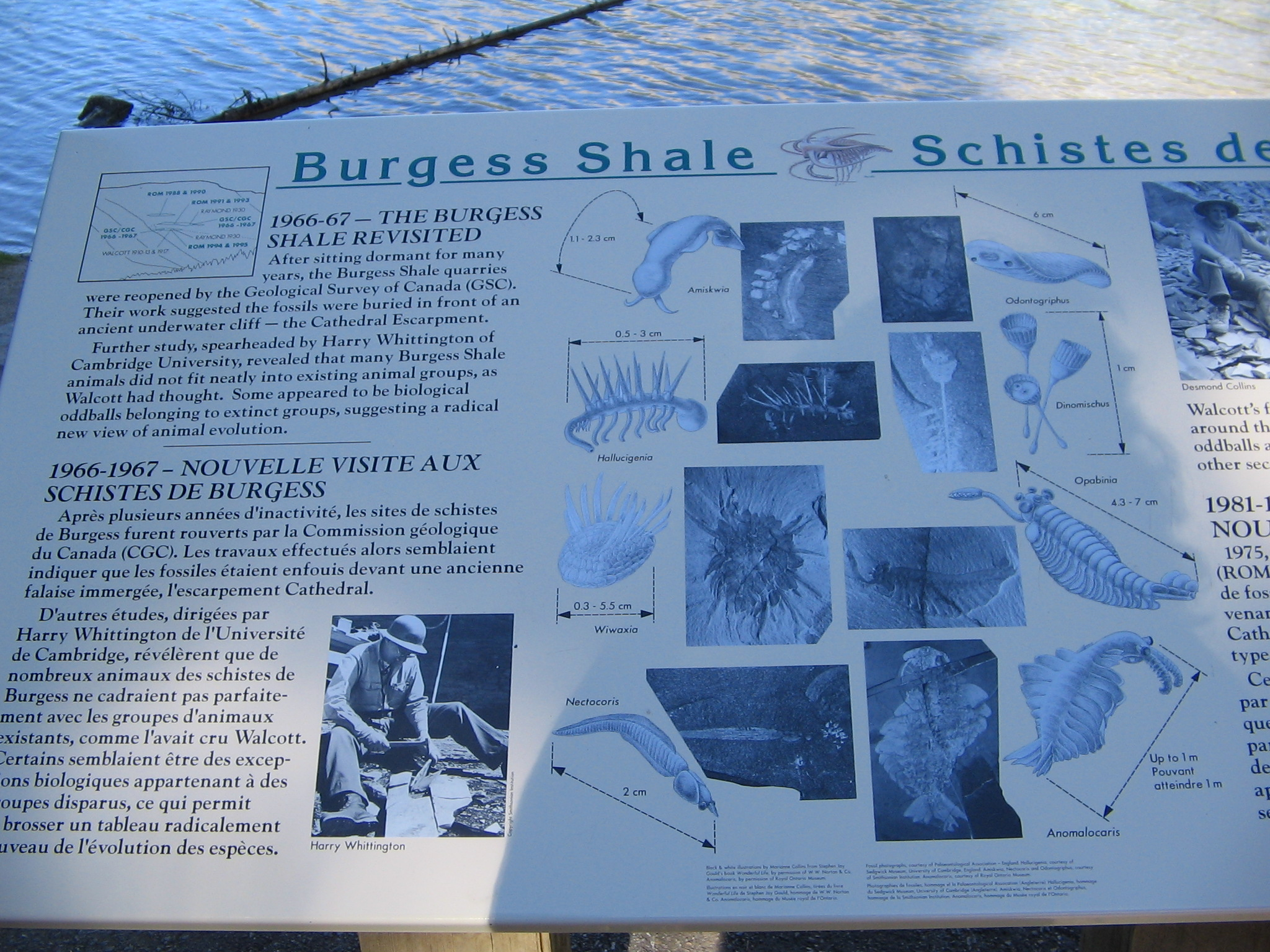 an overview of the burgess shale Project description  the burgess shale offers a unique opportunity to link scf  assemblages to bed-by-bed level surveys of representative macrofossil.