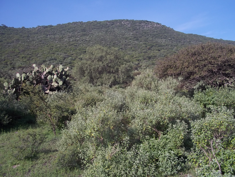 Depiction of Cerro Mesa Ahumada