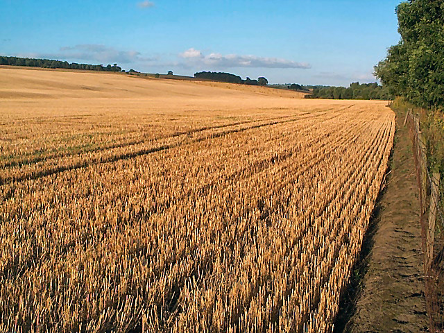 File:Corn field east of Otley - geograph.org.uk - 46024.jpg
