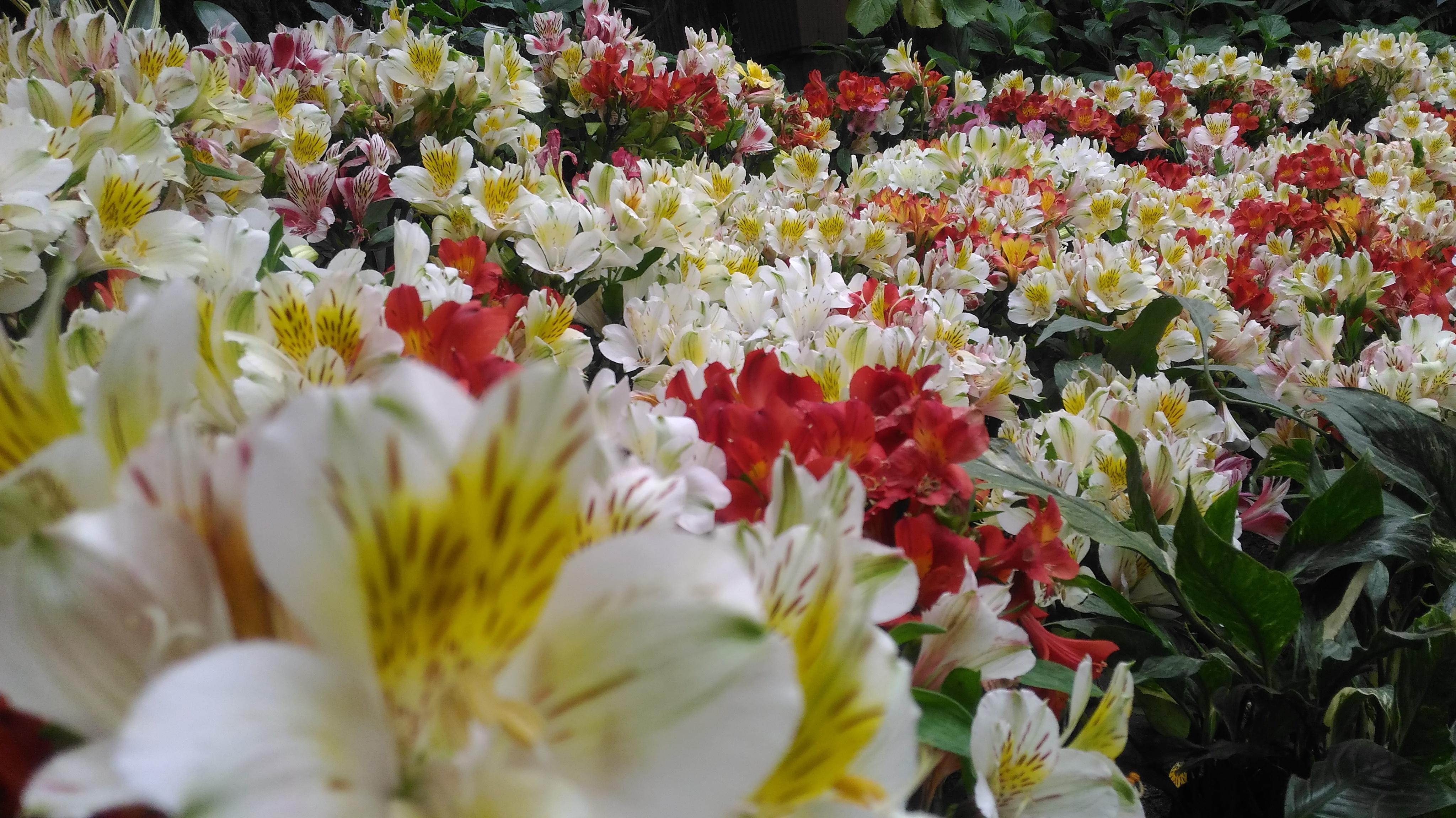 Sikkim Flower Festival