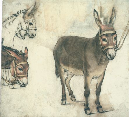 File:Gerard ter Borch the Elde 3 studies of a donkey circa 1612.jpg