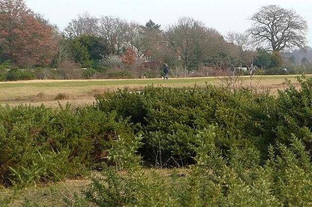 Greenham Common - geograph.org.uk - 1187345