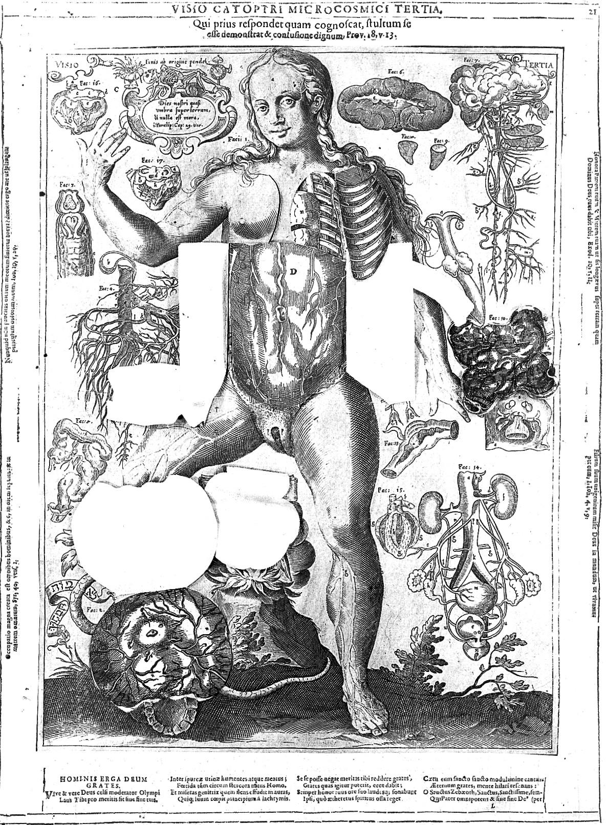 File:J. Remmelin, 1660; female anatomy Wellcome L0018142.jpg ...