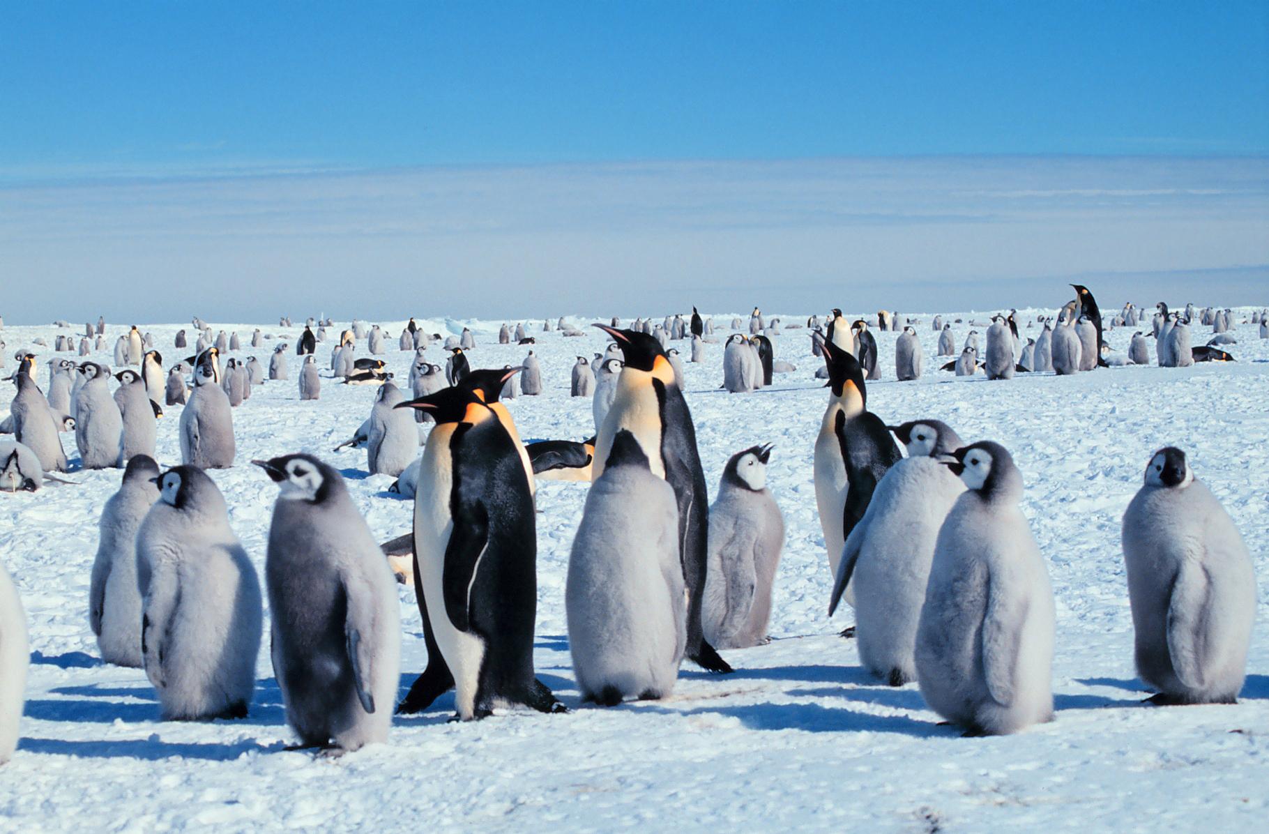пингвины к какому классу относятся