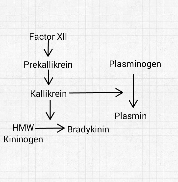 Kinin–kallikrein system - Wikiwand