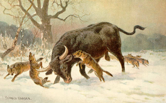 File:Long horned european wild ox.jpg