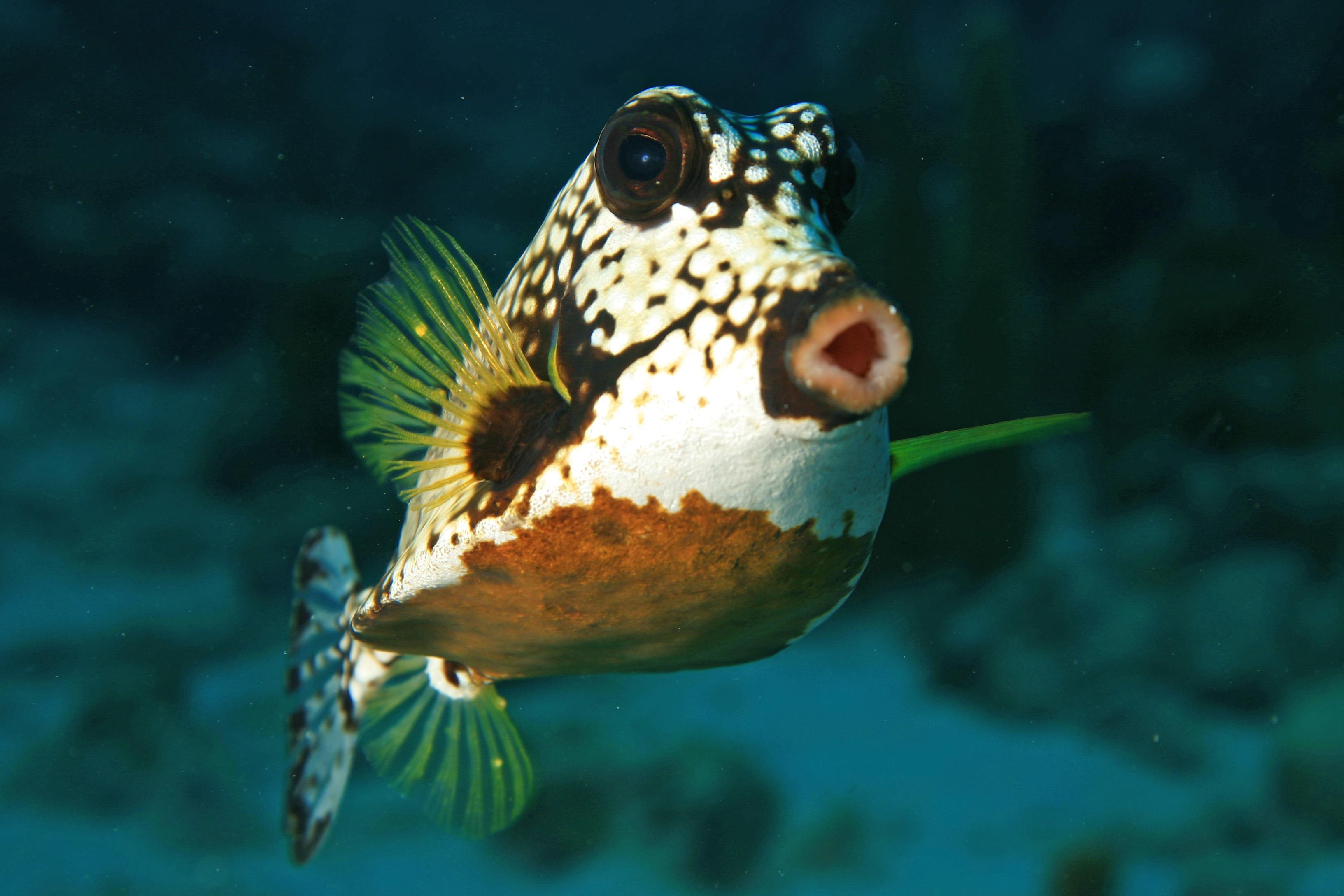 File oooooooooooooooooooo 5230897450 jpg wikimedia commons for Caribbean reef fish