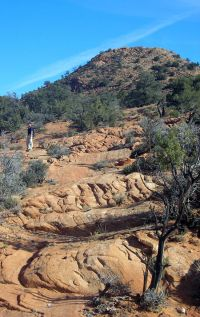 A photo of red rocks and shrubs in the Red Mountain Wilderness