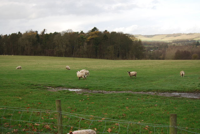 File:Sheep by the path to Leeds - geograph.org.uk - 1613159.jpg