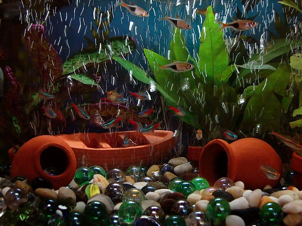 alt=Photo displaying plants, small fish, and what appear to be tipped-over orange vases