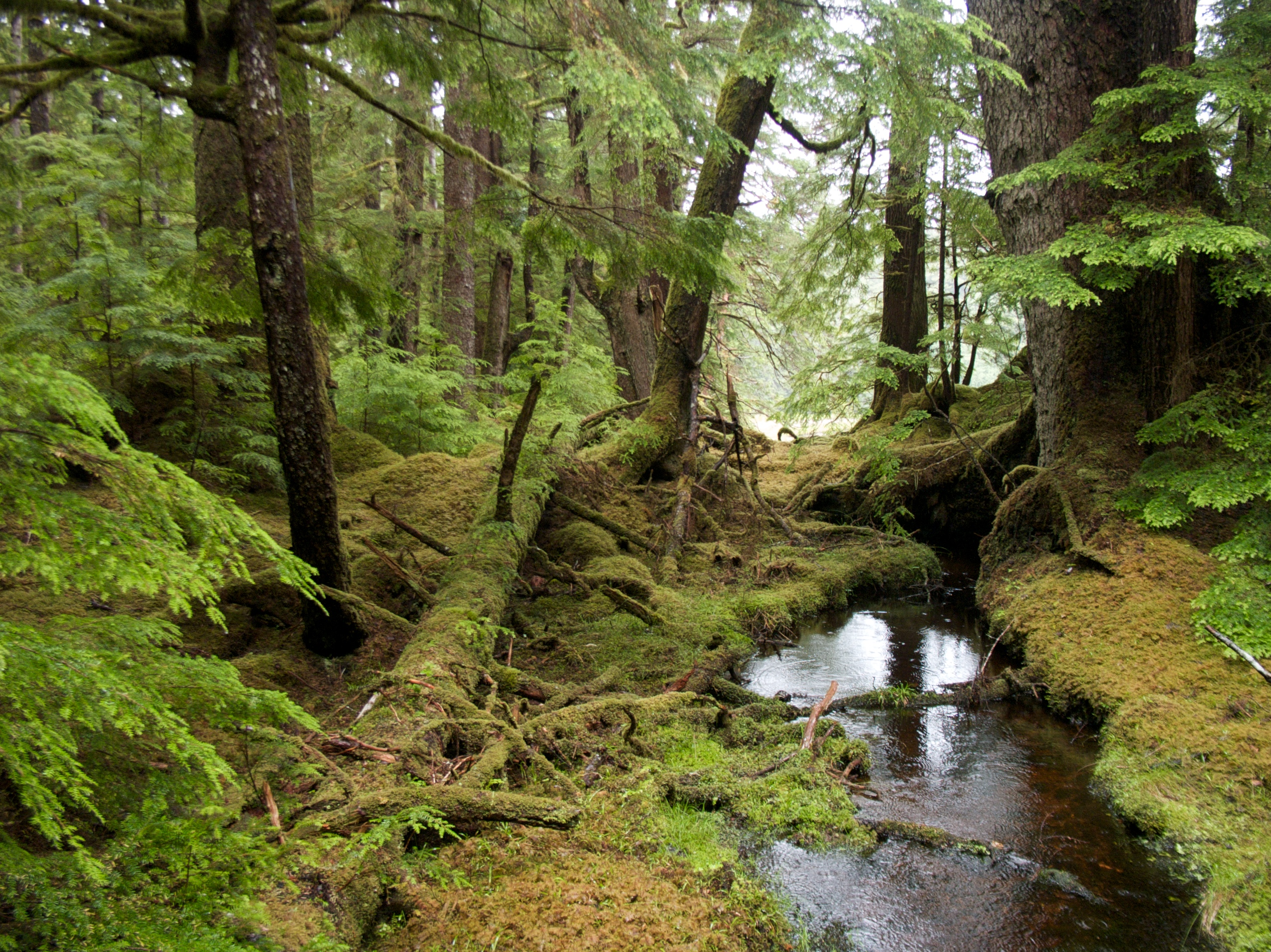 The Rain Forests of Home: Profile Of A North American Bioregion