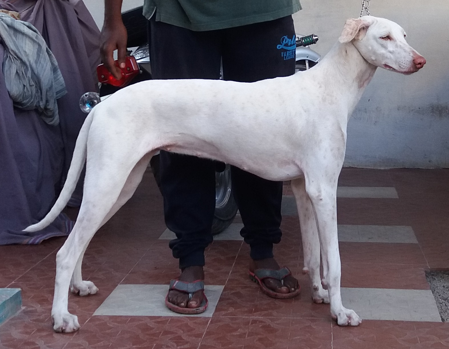 Raalayam Dog Wikipedia