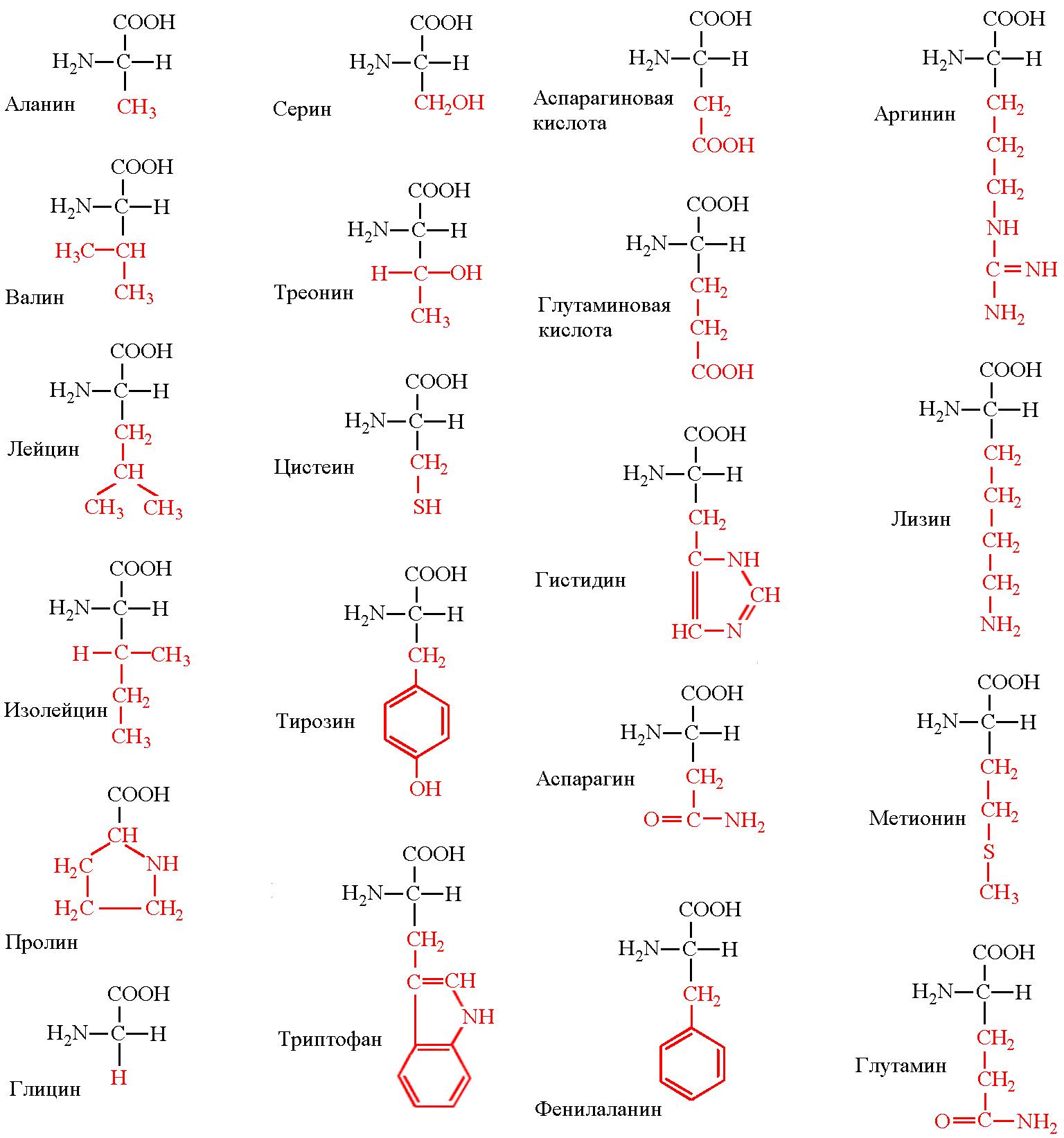 Аминокислоты.png