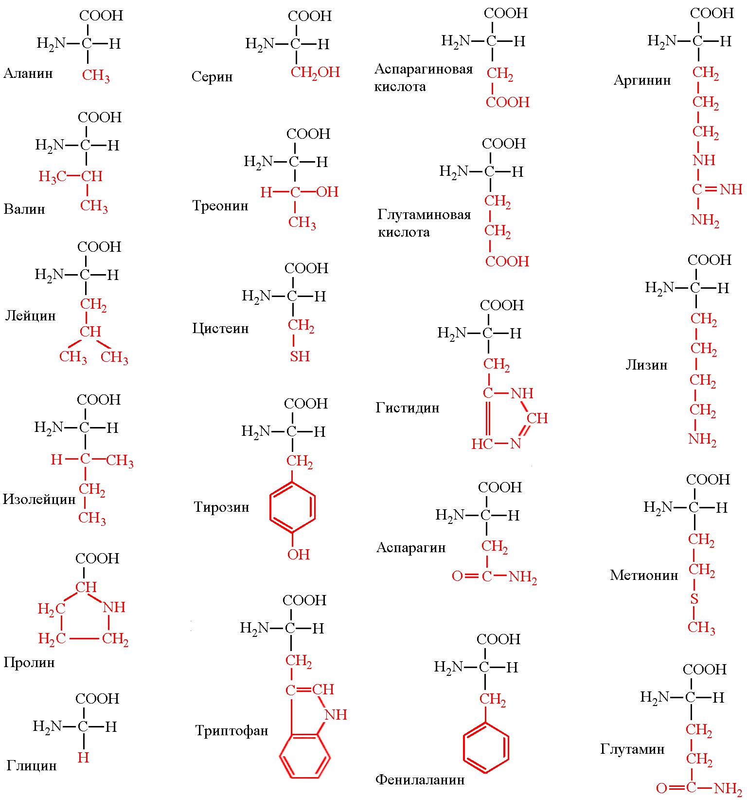 Аминокислоты пептиды белки под ред ю в митина туринабол тренболон энантат пропианат