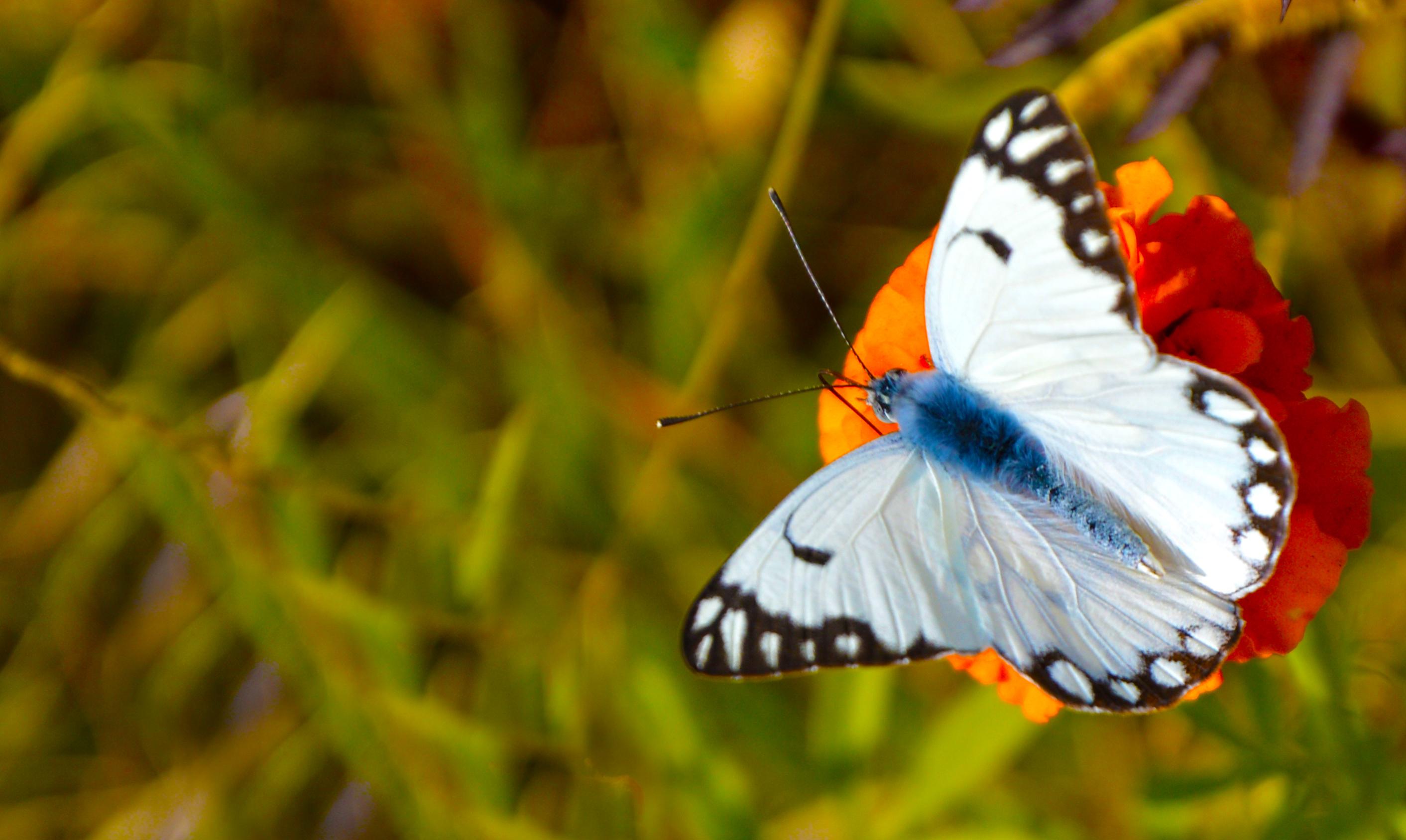 file a butterfly on a flower 8236570637 jpg wikimedia commons