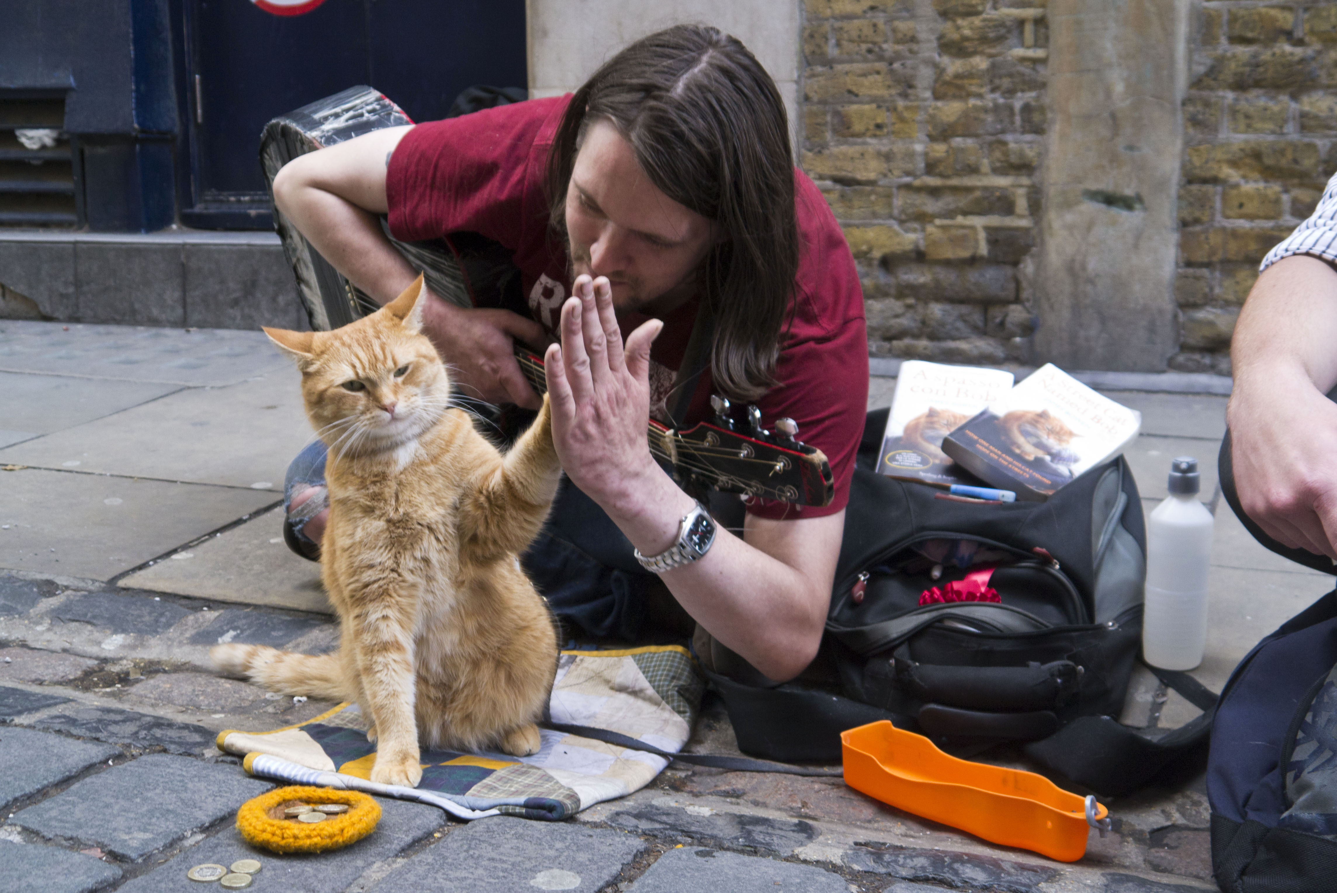 Bob the Street Cat high-fives his official biographer James Bowen on the publication of their new book. (7510771672).jpg