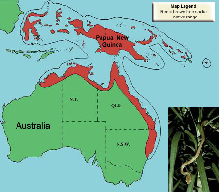 Boiga_irregularis_rangemap brown tree snake wikipedia