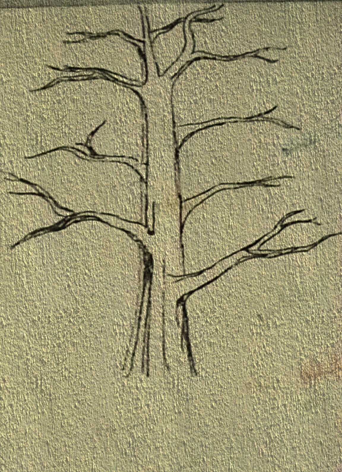 File Desenho Arvore Jpeg Wikimedia Commons