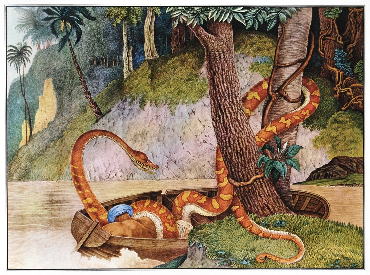 giant anaconda in the Amazon river  rpics  reddit