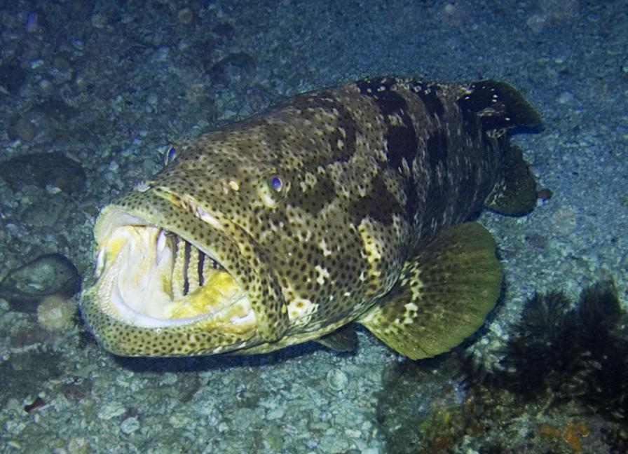 Aquarium Tropical Fish Freshwater Fish for the Aquarium