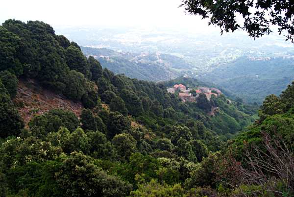 Bosque mediterr neo wikipedia la enciclopedia libre for Arboles de hoja perenne para clima mediterraneo