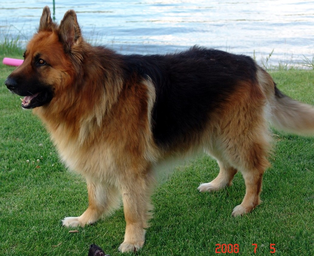 Image Result For Dog Training North